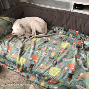 And just like that he slept in the big boy bed… (settling new puppies with no stress)