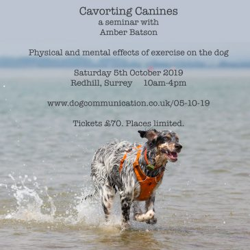 Dog Comm presents 'Cavorting Canines' a seminar with Amber Batson, veterinary behaviourist