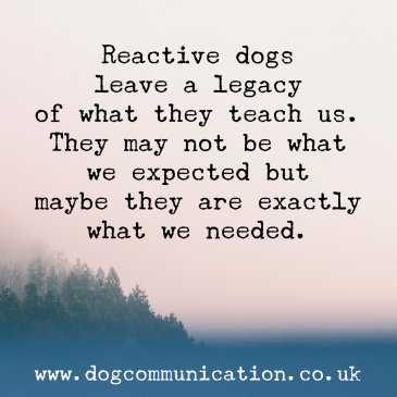 Reactive dogs leave a legacy of what they teach us